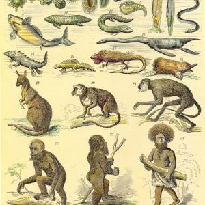 an analysis of the idea of evolution by charles darwin In 1859, charles darwin's seminal book on the origin of species by means of natural selection was published and presented the groundbreaking idea that all species on earth are the result of a slow process of evolution and continue to evolve as part of the struggle now commonly known as the survival of the fittest.