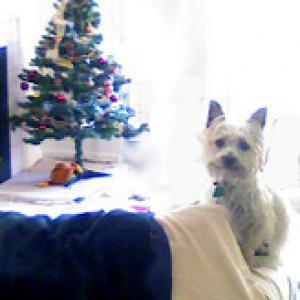 December 2007 - Picture - Penelope and Tree(2).jpg