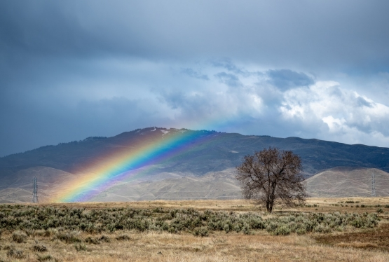 Photo of a high desert mountain with a rainbow and tree in the foreground.